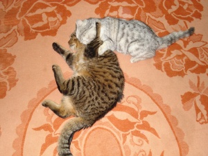 Antonio&Ophelia